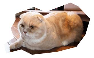 猫と暮らすモデルハウス 店長の僕です