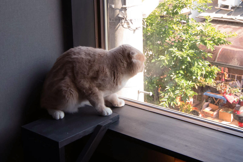 僕(猫)のお気に入りの場所。日光浴のお昼寝。紫外線も少しは必要なんだ。