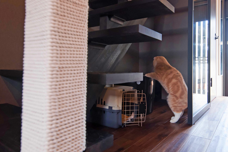 僕(猫)はとってもきれい好き。トイレの場所も考えて。食事の場所とは別がいいな。