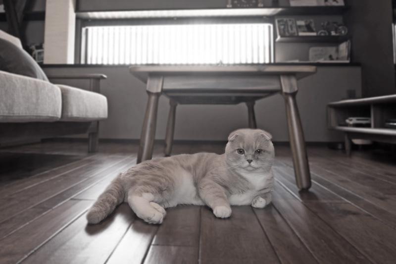 僕(猫)のモデルハウスご紹介
