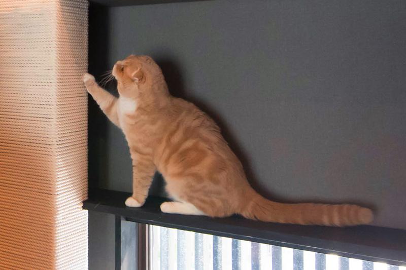 猫と暮らすモデルハウス