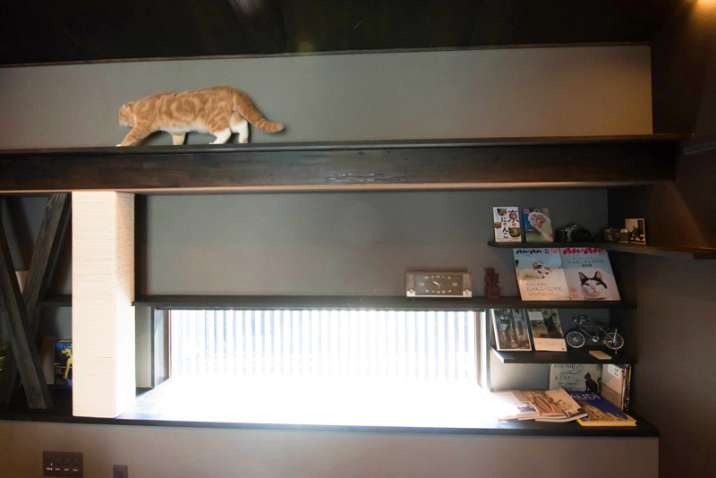 2階の部屋にも、飾り棚のようなキャットウォークを張り巡らせてみたよ。