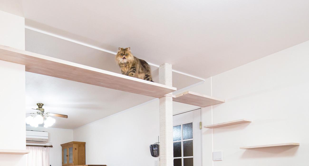 猫と人がどちらも快適に過ごせる理想の住まい 猫リノベーション、猫リフォーム「僕は猫」