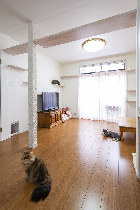 京都府向日市3匹の猫と暮らすリビング