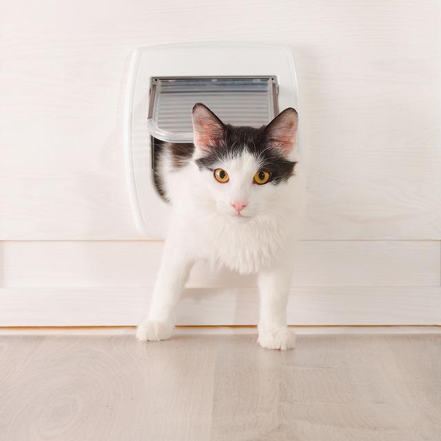 猫ドアを作ってくれるなら、透明で軽い素材にして。