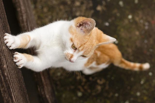 壁をひっかく猫