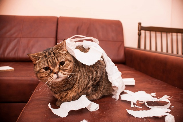 大事なものは仕切りや扉を。猫は飛びつきたくなっちゃう。