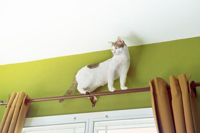 猫は高い所が大好き!