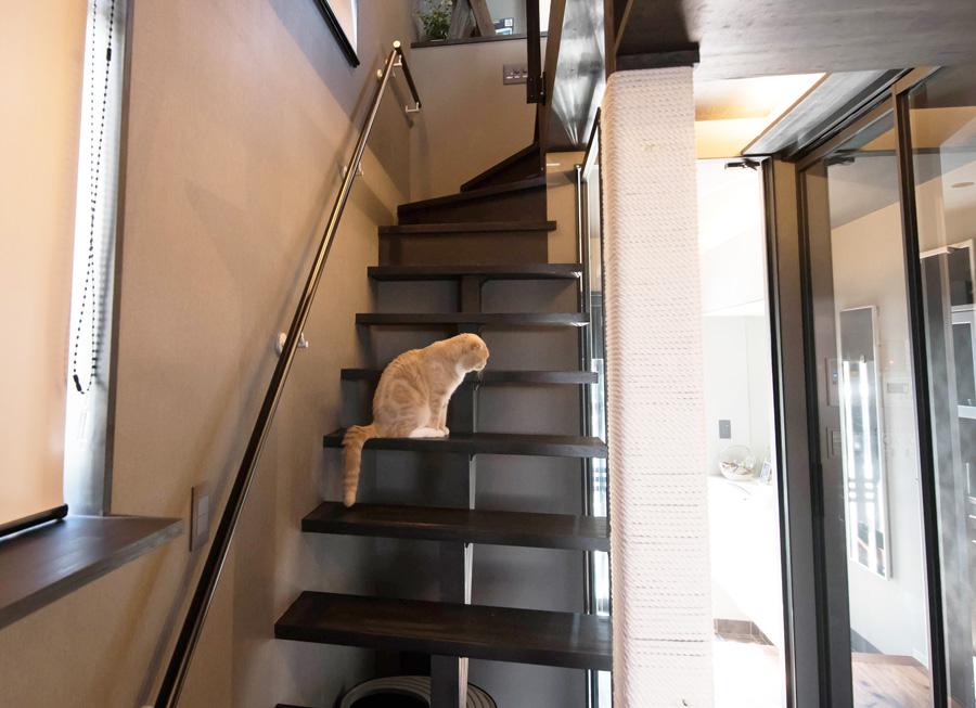 京都嵯峨の猫と暮らすモデルハウス