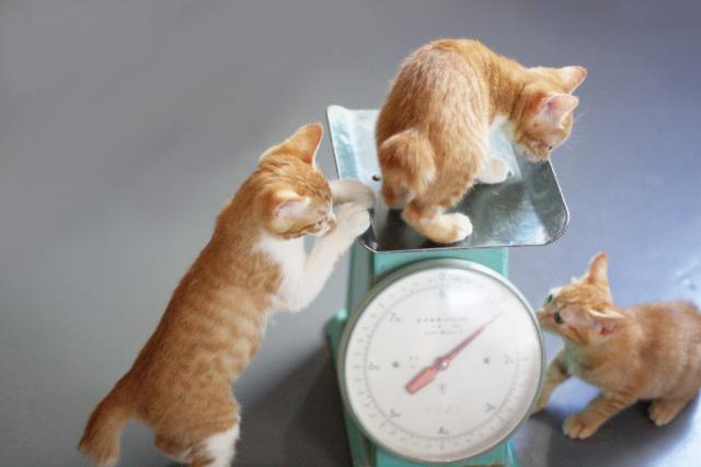 ステイホームで猫も太った?