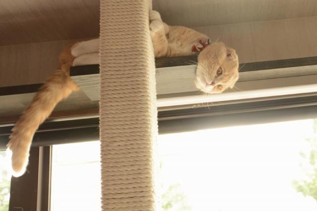 猫にとっての安心空間って?