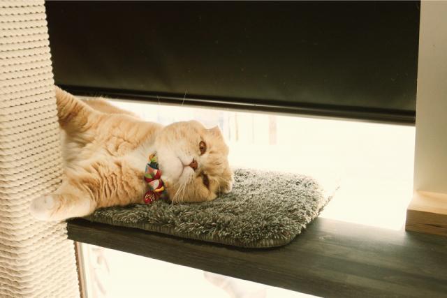猫も冬支度