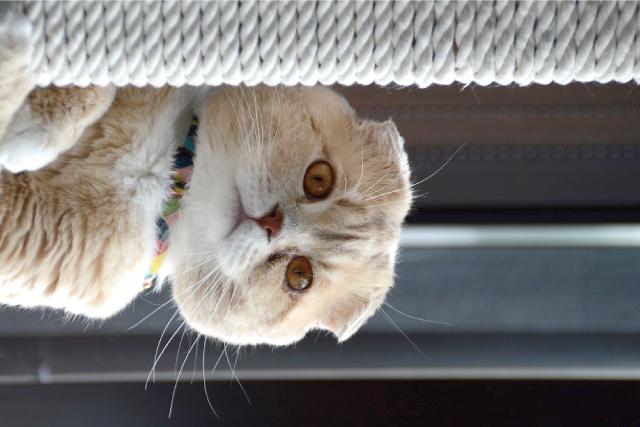 猫の寒がり度は種類でちがう