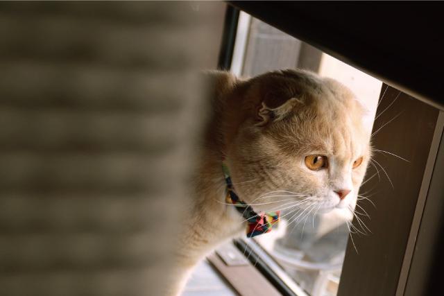 冬の暖房。猫には注意することも
