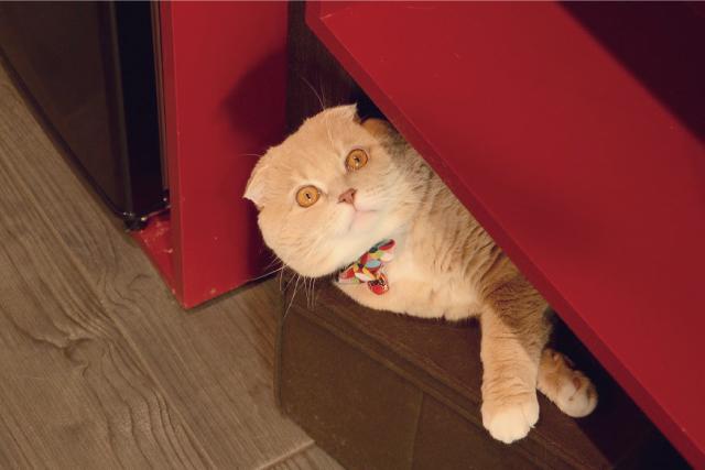 爪研ぎって、猫には大切なんだ。