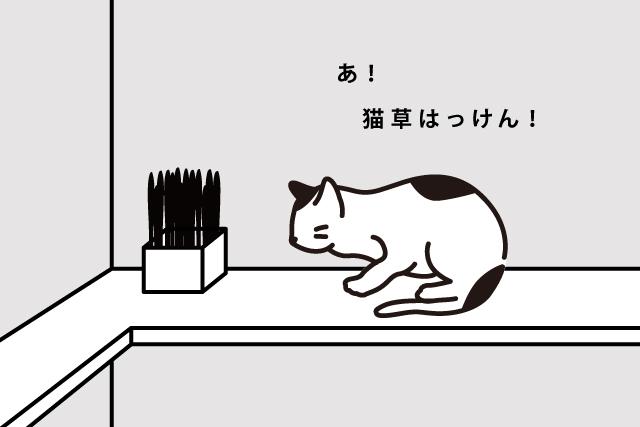 猫の健康はマンネリ打破から!