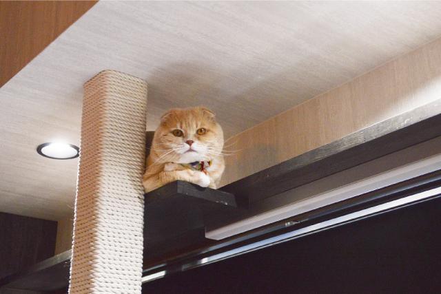 猫はカーテンが気になっちゃう♪