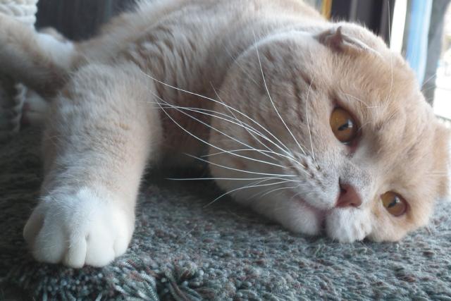 猫も夏バテしちゃう。その対策は?